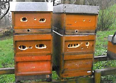 Houten bijenkast